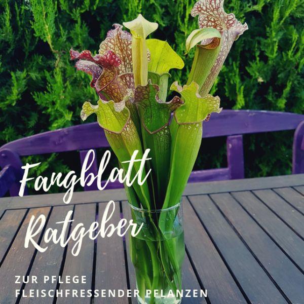 Fangblatt - Ebook Ratgeber zur Pflege fleischfressender Pflanzen