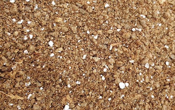 Substrat für Kakteen & Sukkulenten